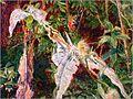 Ofelia Millais 8.jpg