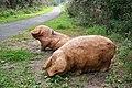Oink - geograph.org.uk - 976917.jpg
