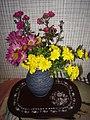 Okrasné květiny doma a na zahrádce 03.jpg