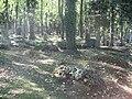 Olšanské hřbitovy (37).jpg