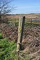Old Gatepost falling to bits - geograph.org.uk - 1758839.jpg