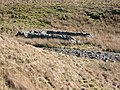 Old sheepfold - geograph.org.uk - 379307.jpg