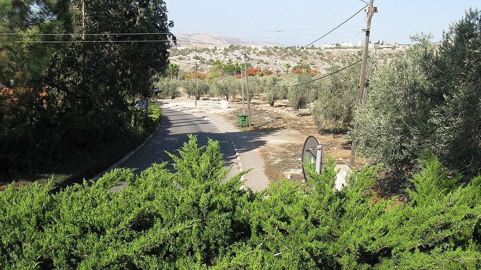 Olives tree from kedumim 3
