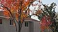 Ontario, CA, USA - panoramio (14).jpg
