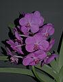 Orchid (8645588726).jpg