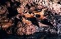 Ossa Grotta dei Cervi.jpg
