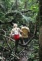 Overbridge rain forest (2720232076).jpg