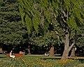 Overfelt Park.jpg