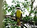 Pássaro amarelo 2.JPG