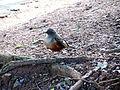 Pássaros em Porto Alegre 005.JPG
