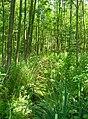 Pístecký les NR.jpg