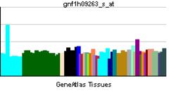 PBB GE PDGFD-gnf1h09263 s ĉe tn.png