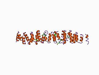 Clathrin - clathrin heavy chain repeat