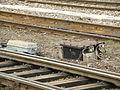 PKP Warszawa Wschodnia - railway station (20).JPG