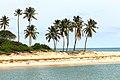 Palm trees beside Dangote Refinery at leki village Lagos Nigeria.jpg