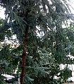 Palmiarnia Zielonogórska - środek15.jpg