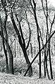 Paolo Monti - Serie fotografica (Anzola d'Ossola, 1970) - BEIC 6358114.jpg
