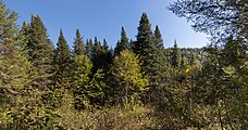 Parc national de la Jacques-Cartier 01.jpg
