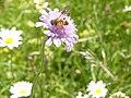 Parco naturale Tre Cime, insetti.jpg