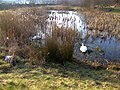 Park and swans - panoramio.jpg