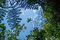 Parque Nacional de Itatiaia-5.jpg