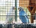 Parque de Europa - birds.jpg