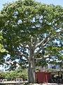 Parque del Este 2012 009.JPG