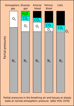 Partial pressures in tissues.png