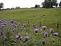 Pasture Below Spring Hill - geograph.org.uk - 22909.jpg