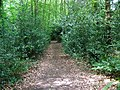 Path, Tinney's Firs - geograph.org.uk - 1408240.jpg