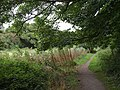 Path on Hackney Marshes - geograph.org.uk - 1480879.jpg