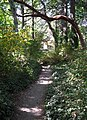 Path up to UVic from Mystic Vale and Haro road. READ INFO IN PANORAMIO-COMMENTS - panoramio.jpg