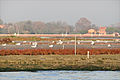 Paysage de la lagune de Venise (8203382081).jpg