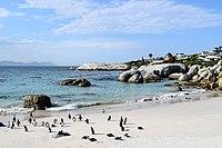 Penguins at Boulders Beach, Cape Town (16).jpg