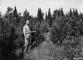 Photograph of Claude Wickard Inspecting a 1936 Norway Pine Plantation - NARA - 2129559.tif