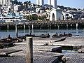 Pier 39 Sea Lions, San Francisco.JPG