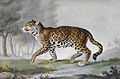 Pierre-François de Wailly – Grande Panthere (1812).jpg