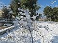 PikiWiki Israel 41376 Snow in Jerusalem.JPG