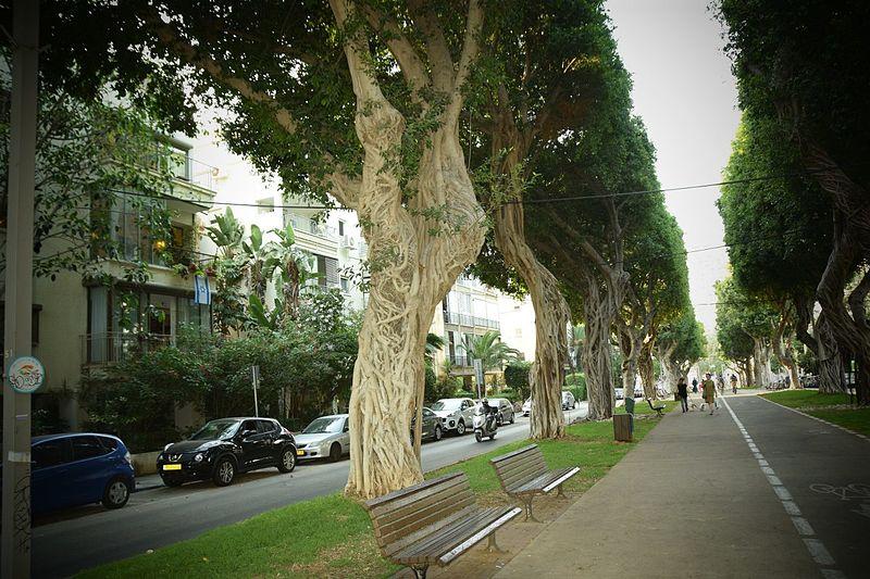 שדרות חן תל אביב