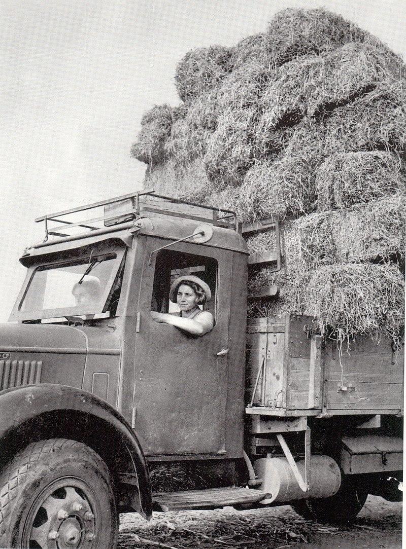 נהגת משאית