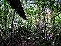 Piney Falls Swinging Bridge - panoramio.jpg
