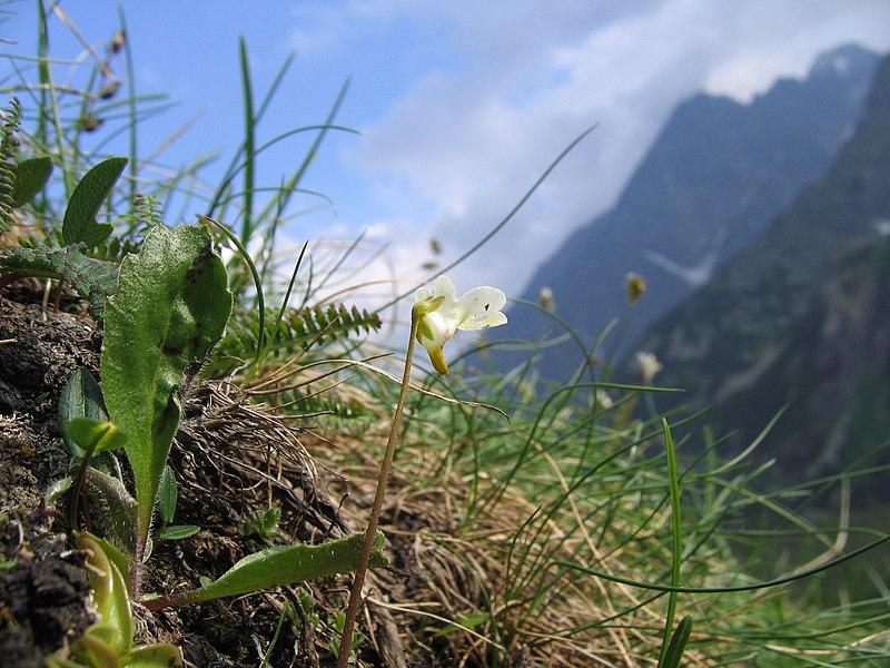 doliny w Tatrach