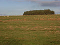 Plantation and pasture near Edge House - geograph.org.uk - 298505.jpg