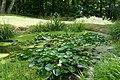 Plantes aquatiques-Jardins de Callunes (2).jpg