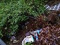 Plastic wastes.jpg