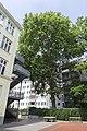 Platanus orientalis, Margaretenstraße 104.jpg