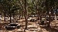Playa La Aldea IV, picnic area (GPS) - panoramio.jpg