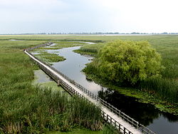 Point Pelee Marsh -a.jpg
