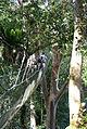 Poring Hot Spring Canopy Walk 0010.jpg