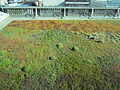 Portland Central Library, Oregon (2012) - 158 - green roof.JPG